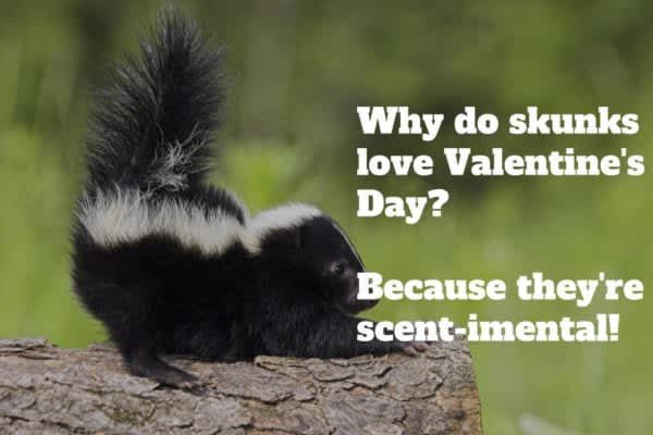 Image Result For Clean Valentine Jokes Squirrel Funny Squirrel Quote Funny