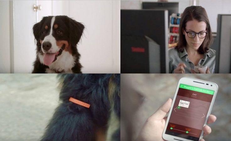 Tail Talk : Το νέο gudget που μεταφράζει τα συναισθήματα του σκύλου σας!