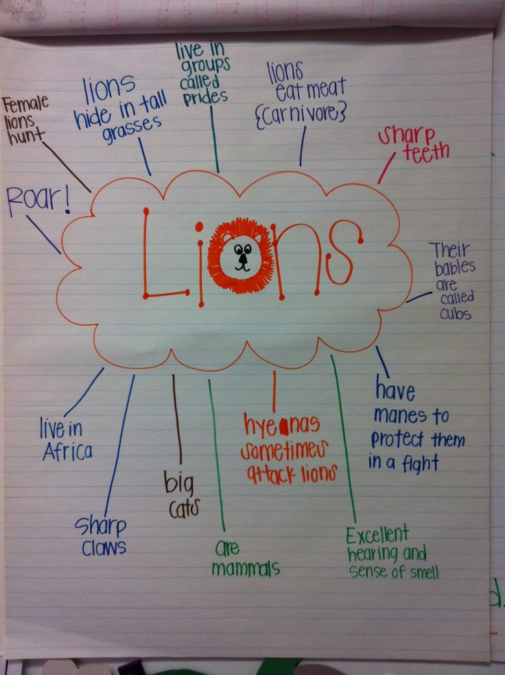 Friday we learned about lions. We created a bubble map with all our new learning. Then we made lions and wrote about lions.