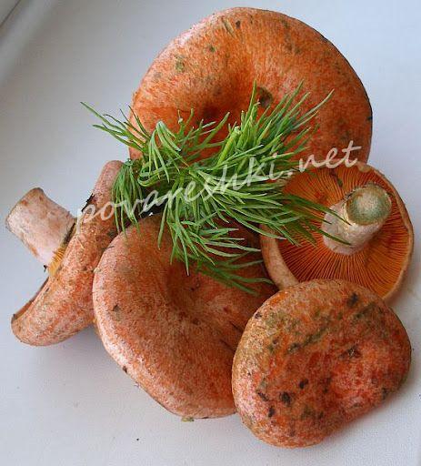 Солим рыжики - кулинарные рецепты Поваренка с поварешкой