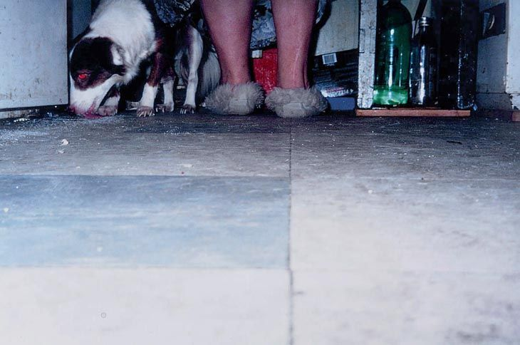 Dog Licking Floor, 1995