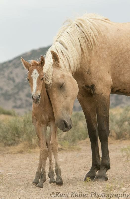 Wild mare and foal © Kent Keller Photography