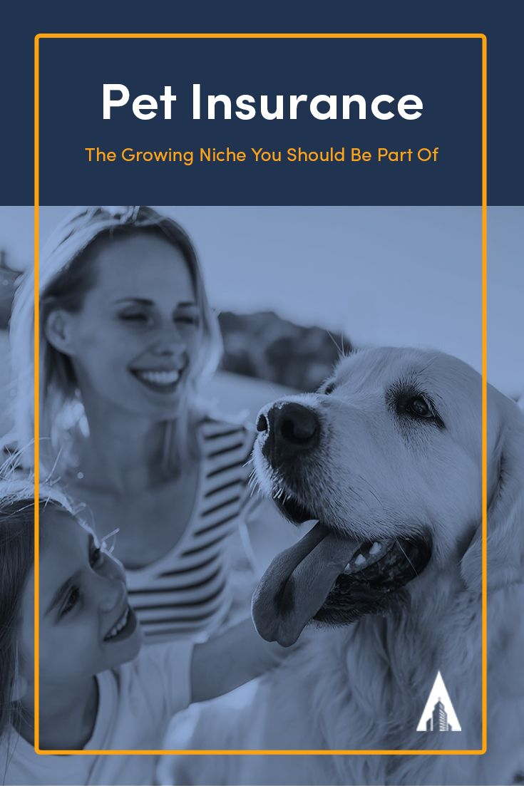 Pet Insurance The Growing Niche You Should Be Part Of With