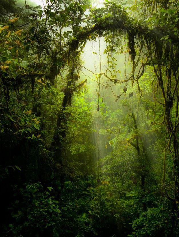 Les plus belles forets du monde foret tropicale