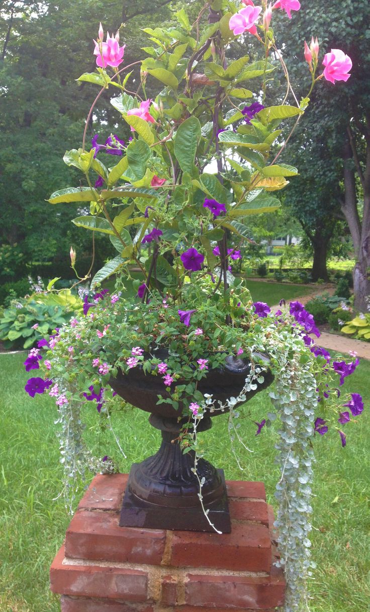 Cascading wave petunias and lantana surround a mandevilla - Wave petunias in containers ...