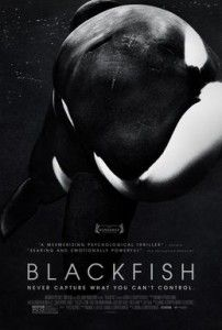 Ever thought about why you should see whales in the wild rather than a marine park? Blackfish will help you understand.