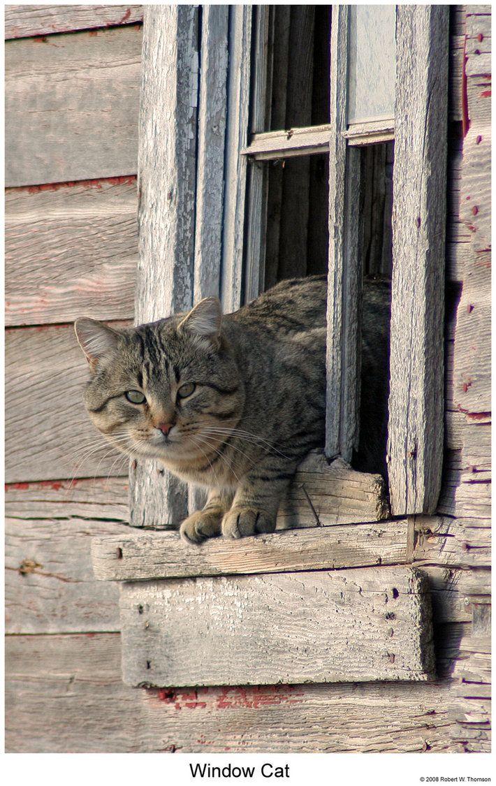 Window Cat by hunter1828 on deviantART