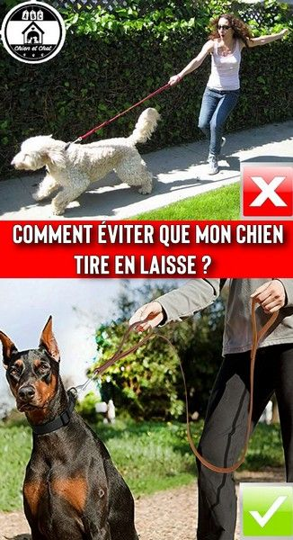 Laisse en cuir (double poignée) pour gros chien et molosse   Collier, Laisse  et Harnais pour Chien   Pinterest 64c1262996b8
