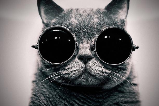 17 Best images about Schrödinger's cat on Pinterest ...