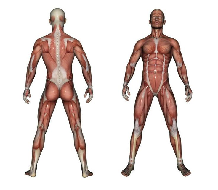 by Loren Bertocci, PhD I stumbled across the following article in the New York Times today: Is it true that the muscle mass we lose at, say, 60 years old cannot be regained? Reader Question – I'm a 77-year-old man... Continue Reading →