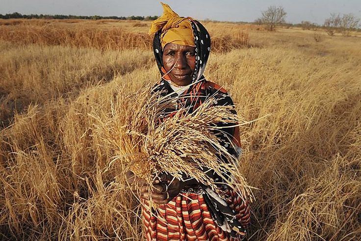 Thanks to Sustainable Farming, Global Hunger Is on the Decline | TakePart