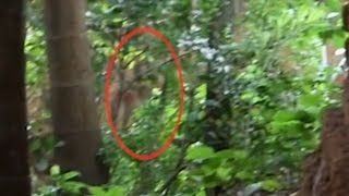 Scary Ghost Videos | Ghost Caught on tape 2015 Real Ghost Caught on tape behind the tree