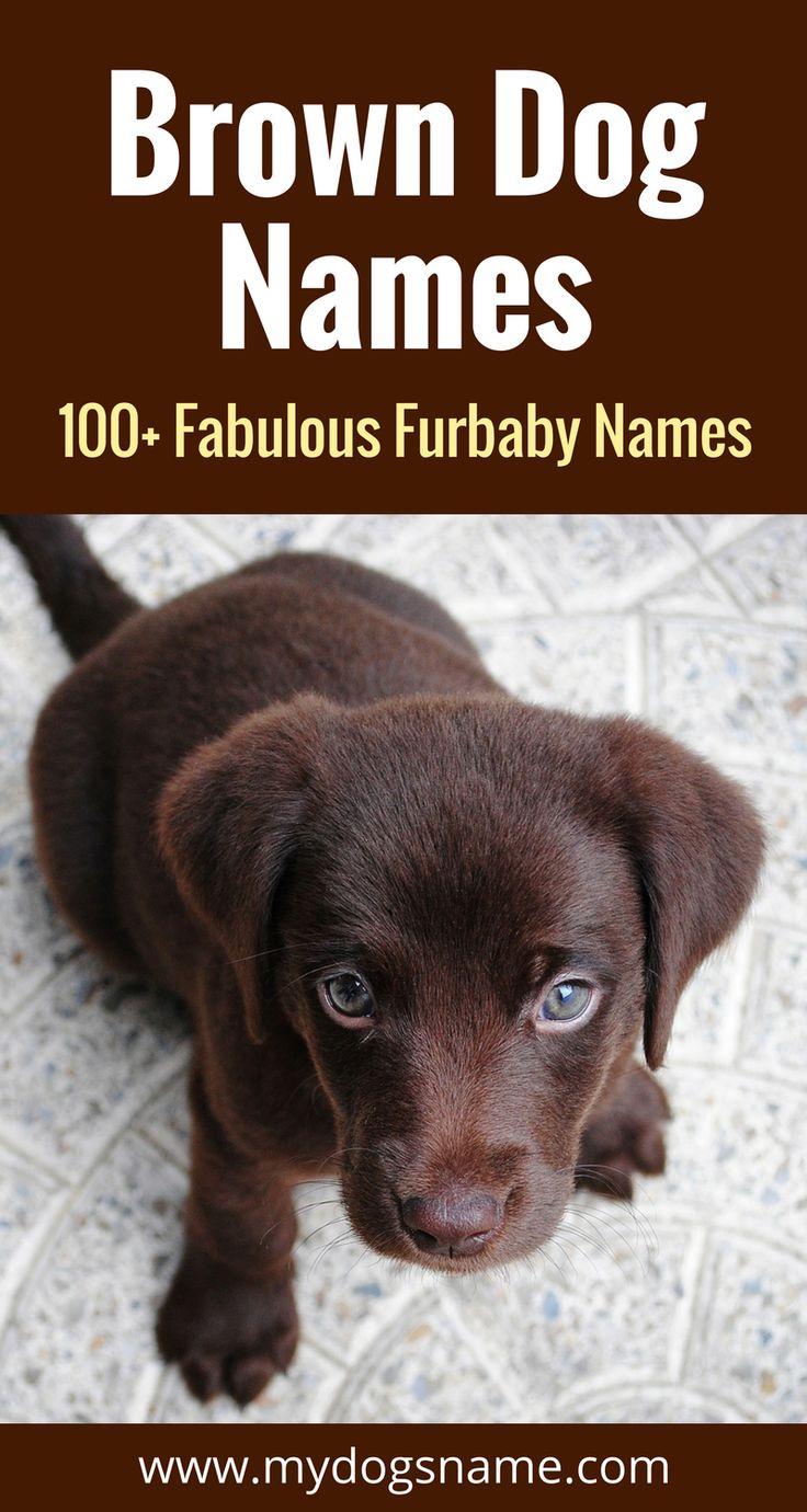 Fabulous dog names for your brown furbaby. These brown dog names are perfect if you have a dog with all brown fur or even just hints of the color.