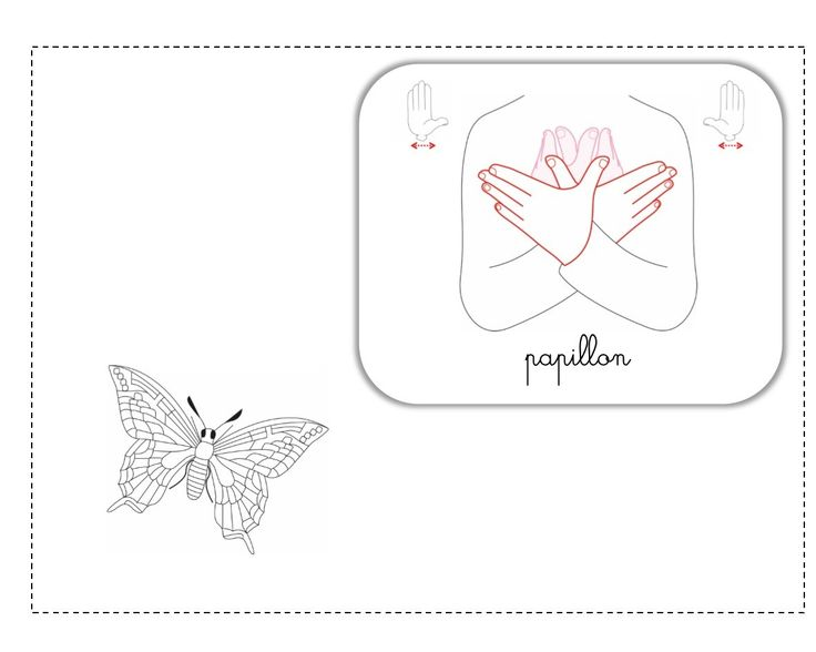 papillon LSF illustration