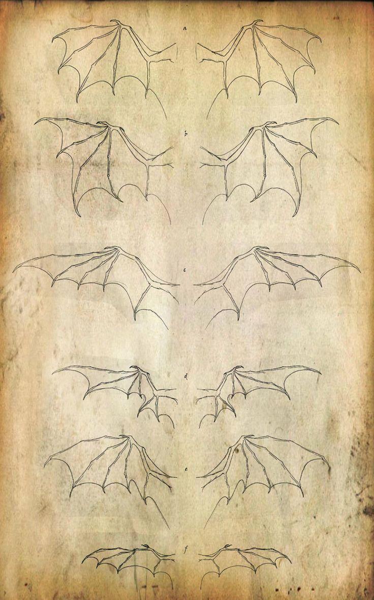 Wings | #illustration #ilustração #wings #asas #drawingtips #drawing #desenhos