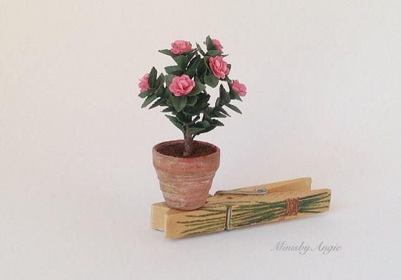 Dollhouse camellia plant.Miniature plant.Miniature pink camellias.