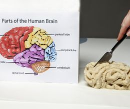 how to make a model of a brain for a school project