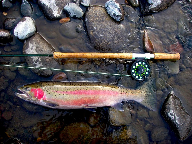 31 best field dressing images on pinterest deer hunting for Best fishing pole for trout