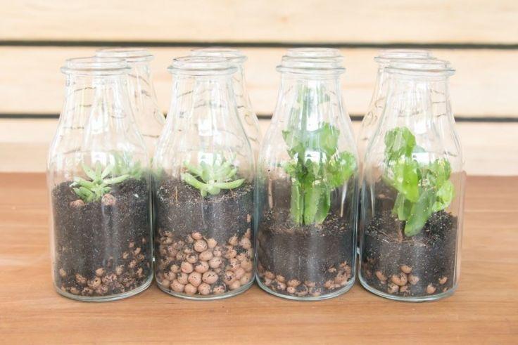 Aprende qué es un terrario y cómo hacer uno tú mismo para decorar tu hogar.
