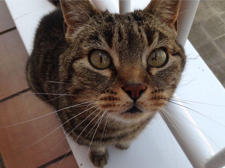 17 mejores ideas sobre gato enano en pinterest gato for Ahuyentar gatos de mi jardin