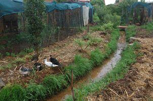 como hacer una zanja drenaje lluvias - Buscar con Google