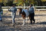 Staff Sgt. Retha Anderson, left, and Sgt. Tamar Simms, both with the Warrior Transition Unit, practice leading a horse while participating in a Horses for Heroes equine assisted psychotherapy program.