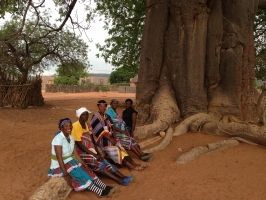 The fertility magic of Baobabs:In the mythology of many African nations, the baobab tree represents life, fertility and is a keeper of the earth. Unsurprising then that the baobab is also steeped in folklore.  There is a belief that women living in huts where baobabs are plentiful have more children than those living outside the baobab zones –which is possibly true as the women eat soup made of baobab leaves which are rich in vitamins and EFA and compensate for any deficiency in their diet.