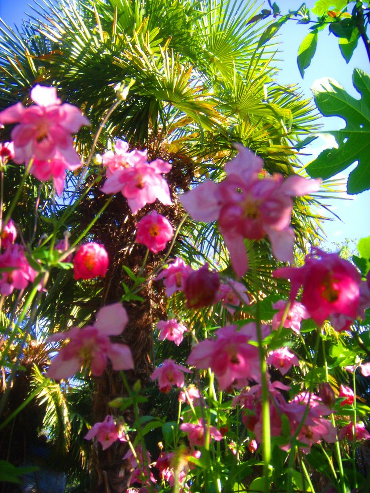 Flores | ツ YOUR favourite NATURE (No Animals) Pins