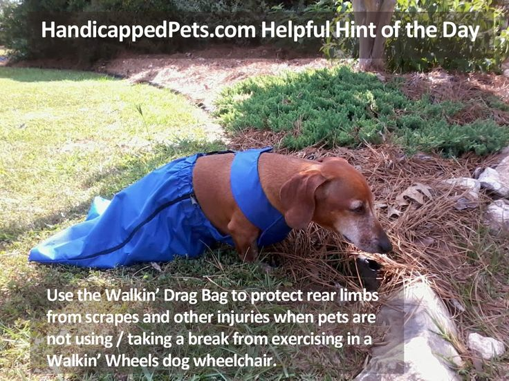 Drag Bags for Paralyzed Dogs How much does a dog wheelchair cost?