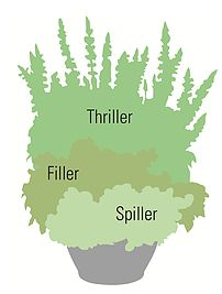 Proven Beauty | Gardening Inspiration | thriller-filler-spiller