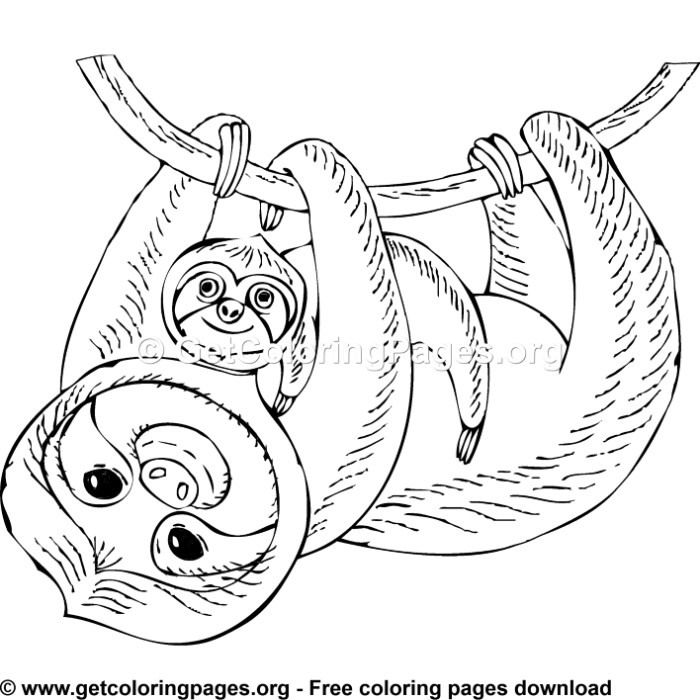 Sloth 3 Colouring Pages Animal Coloring Pages Precious Moments Coloring Pages Colouring Pages