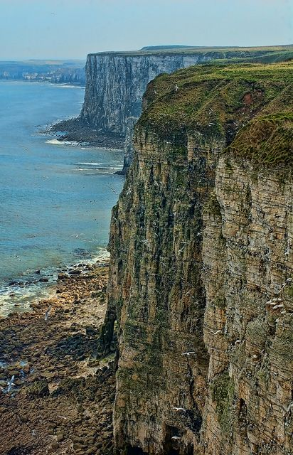 Bempton Cliffs, Bridlington, East Yorkshire - photo by Thomas Tolkien