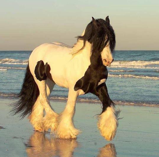 (86) ~Despre Cai~ (~About Horses~) - Photos