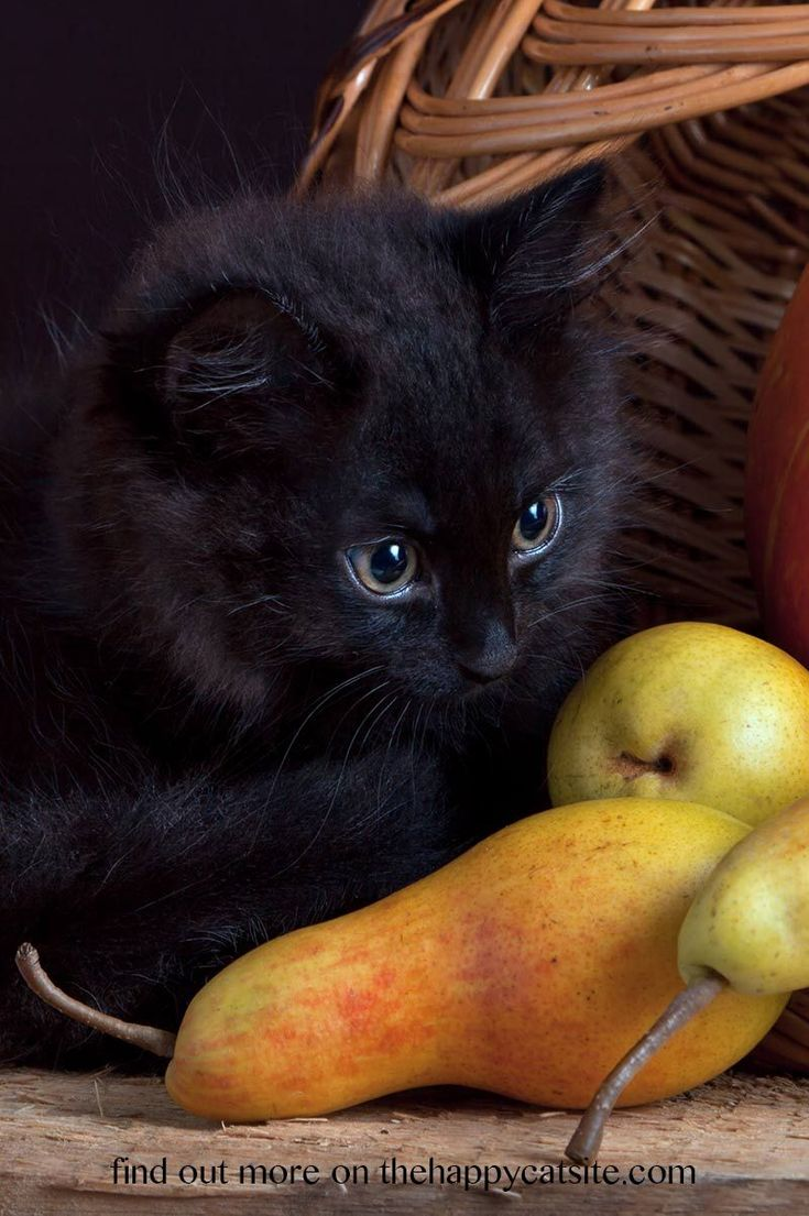 Can Cats Eat Pears Cat Site Cat Diseases Cats