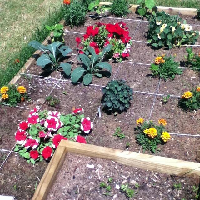 Kale, beans, carrots and flowers. Companion planting ... Companion Planting Kale
