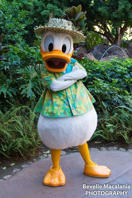 728 best images about donald duck on pinterest fun for for Spa bhopal uniform