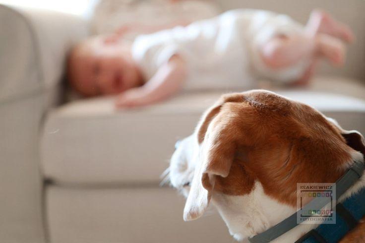 SESJA RODZINNA - STYL ŻYCIA - newborn and dog,  fotograf dzieci Kraków, fotograf dla firm Kraków