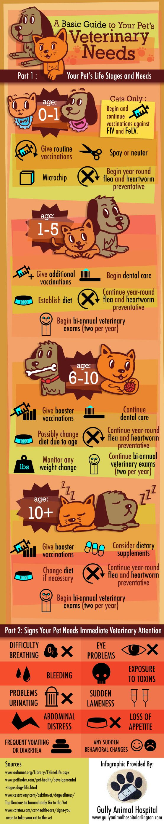 A Guide to Basic Pet Care Do you know when to take your pet to the vet , great basic guide when going to the vet.