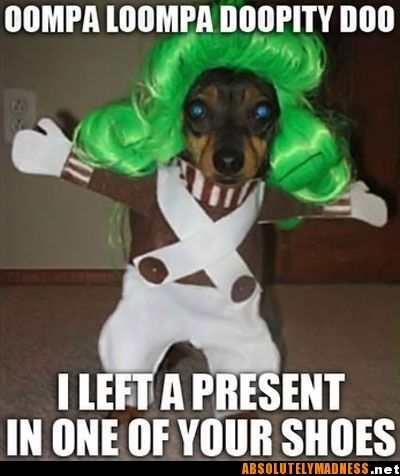 """This dog looks like he's ready to start a fight! """"Don't make me go Wonka on your ass!"""""""