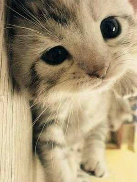I don't even like cats but this is adorable