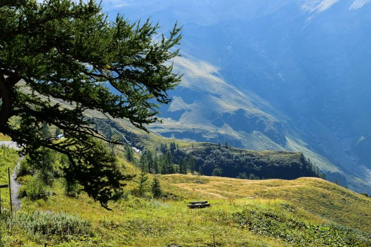 Latschen am Piffkar über dem Fuscher Tal http://www.travelworldonline.de/traveller/hohe-tauern-mit-dem-auto-glockner-hochalpenstrasse/?utm_content=buffer41bc2&utm_medium=social&utm_source=pinterest.com&utm_campaign=buffer ..  #berge #mountains #alpen #alps #panoramastrasse