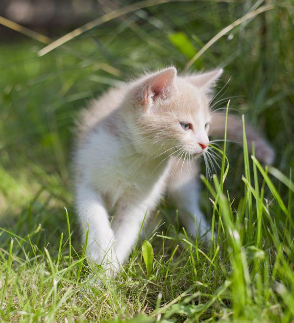 Repousser les chats : Des astuces de grand-mère pour entretenir votre jardin - Linternaute