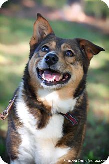 Fayetteville, GA - Border Collie Mix. Meet Pattycakes, a dog for adoption. http://www.adoptapet.com/pet/17573169-fayetteville-georgia-border-collie-mix