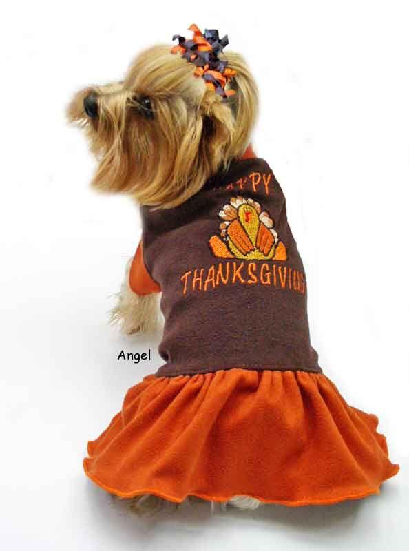 Cute Dogs Alert!! - Pics for some Happy Thanksgiving Cheer ...