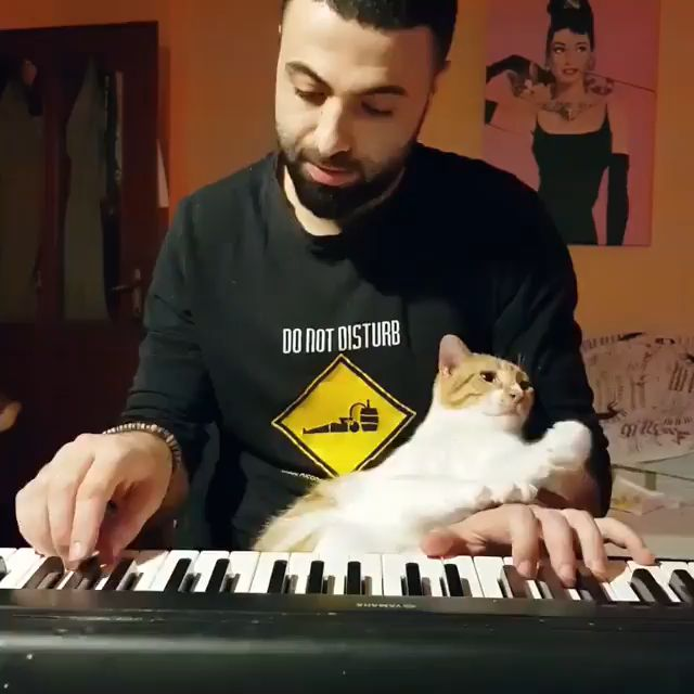 Sweet piano cat – cats