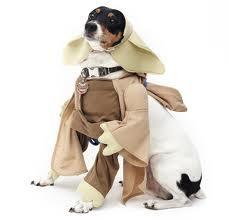 dog fashion - Google Search