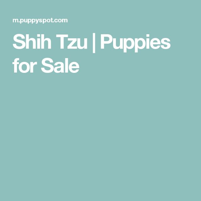Shih Tzu | Puppies for Sale