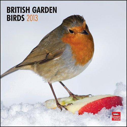 103 best images about robin photos 3 on pinterest. Black Bedroom Furniture Sets. Home Design Ideas