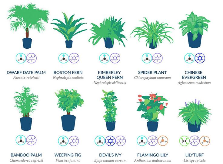 A healthy home environment is vital to a person's well-being and houseplants contribute to it more than you might think. Their main benefit is air-filtering, so it sounds only reasonable that NASA did a Clean Air Study, that found which plants are effective at removing benzene, formaldehyde, trichloroethylene, xylene, and ammonia from the air - chemicals that have been linked to negative health effects like headaches, dizziness, eye irritation, and others.