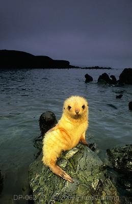 seals... CUTE!!!!!!!